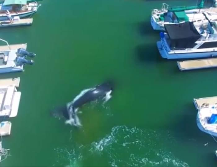 Wieloryb w porcie